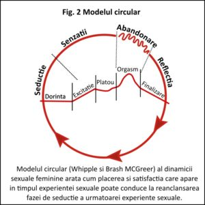 Dorinta sexuala- modelul circular